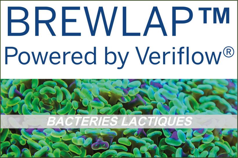 brewLAP détection analyse des bactéries acides lactiques