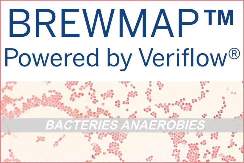 brewMAP détection analyses bactéries gram négatives (Megaspaera et Pectinatus)