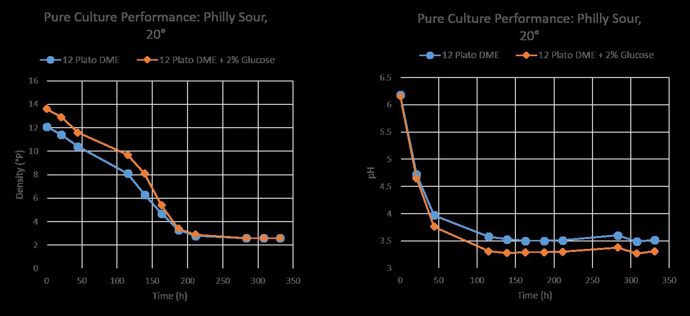 WildBrew™ Philly Sour levure