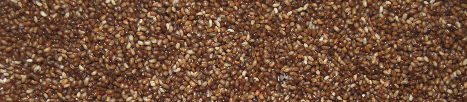 teff cereales afrique